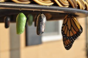 liminal spaces result in transformation